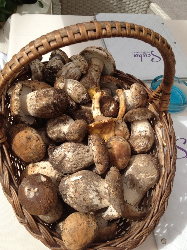 Freshly gathered porcini mushrooms in Motovun