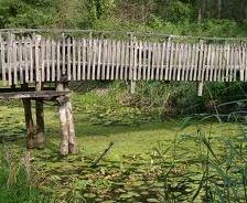 Walkway through the wetlands