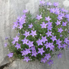 Wildflowers in Paklenica NP