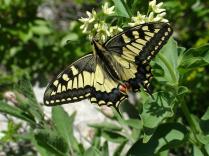 Flora and fauna fantasy