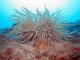 Underwater Kornati